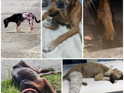 Rescuing abandoned and abused Dogs
