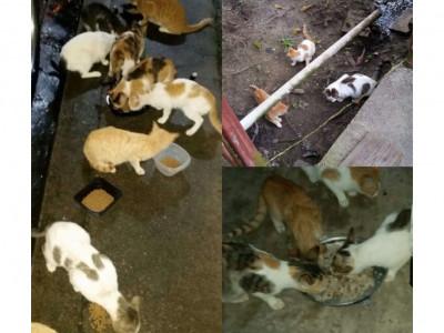 Neighborhood spay/neuter initiative