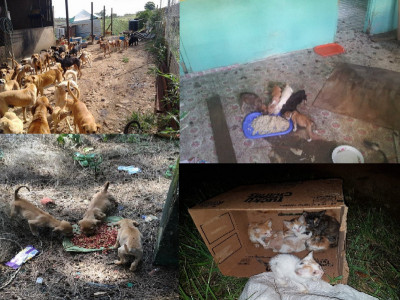 Help the Stray Cats & Dogs of Trinidad and Tobago